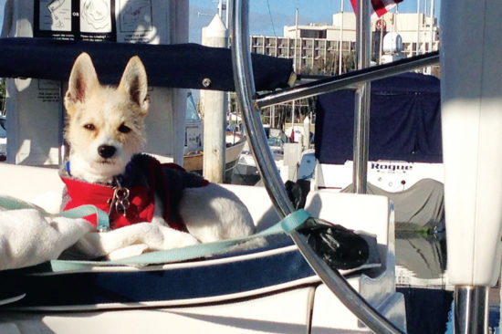 MEET BOAT DOG ZIGGY!