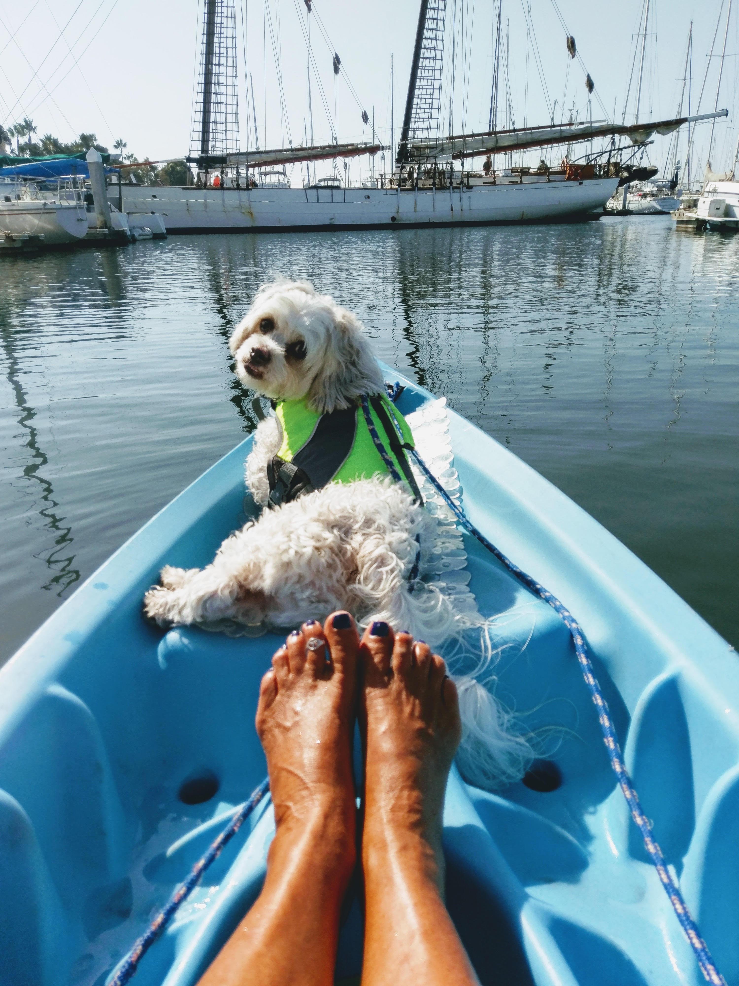 dog aboard