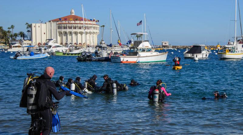 Avalon Harbor underwater cleanup