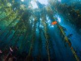 Port of San Diego Sunken Seaweed