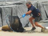 Sea lion and Marine Animal Rescue
