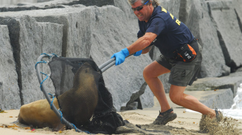 Sea lion and Marine Animal Rescue