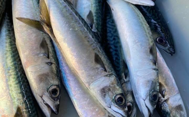 Tuna Harbor Dockside Market Facebook photo