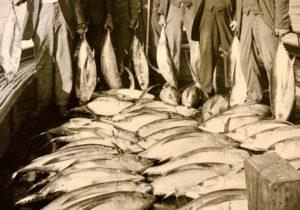 Avalon Tuna Club