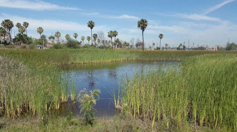 Los Cerritos Wetlands