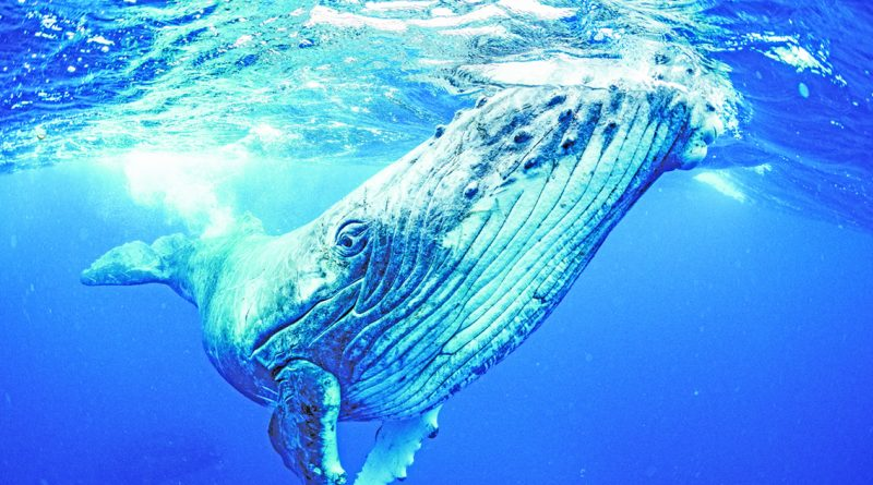 Dana point whales
