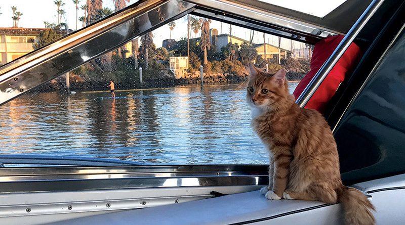 Cat aboard a boat