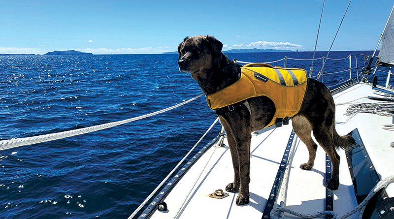 Dog aboard a boat